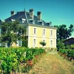 A la découverte des grands vins blancs de Bourgogne.