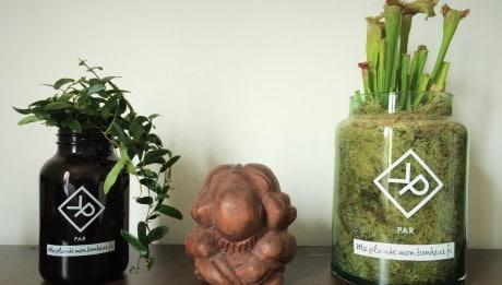 Vitamin plant: plante pour homme
