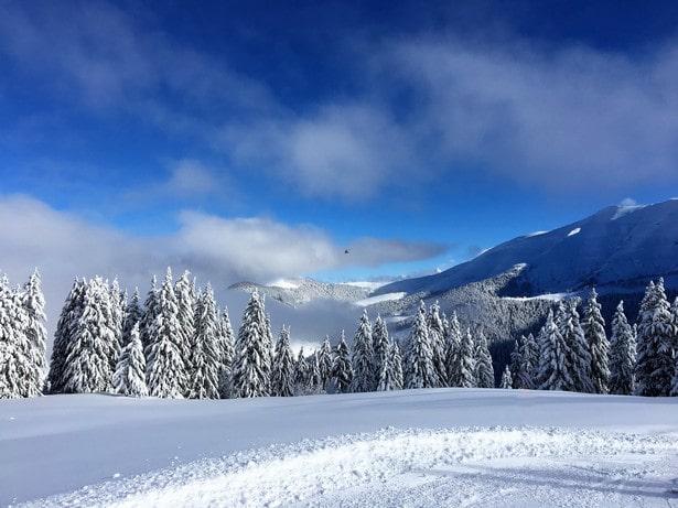 Sur les pistes du domaine de Megève, un plaisir de skier entre les sapins