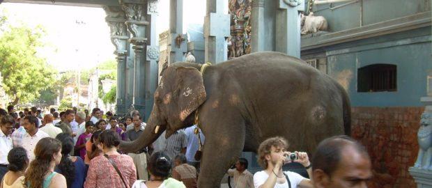 Pondichery la d couverte de la ville franco indienne for Chambre de commerce franco indienne