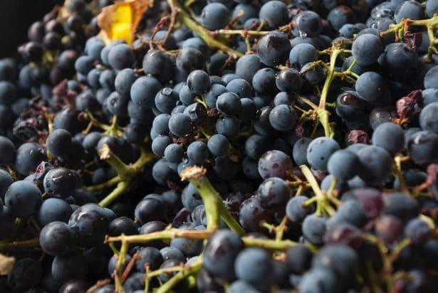 Le meilleur des vignes des 4 coins de la France rapportées directement à Paris