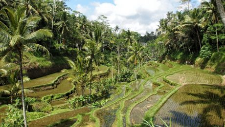 Bali et ses incontournables