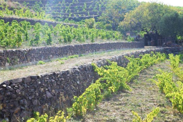 Des murets de pierre de schistes montés par Jean-Jacques Oms