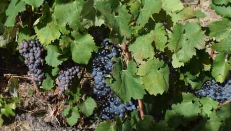 vins bio roussillon