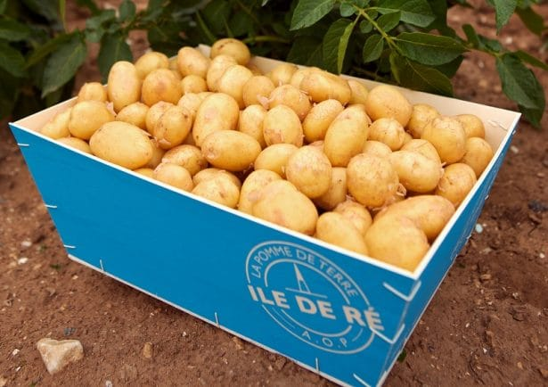 Pomme de terre primeur de l'île de Ré, star des pommes de terre
