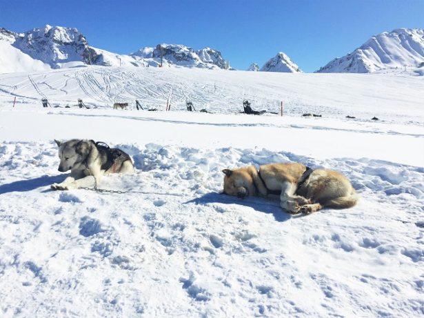 activites-hors-ski-la-plagne-chiens