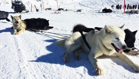 activites-hors-ski-la-plagne-traineau-chiens